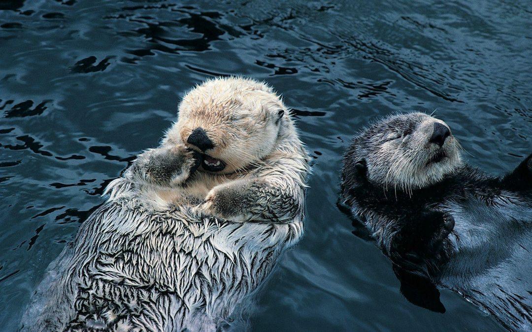 Otter baby's zijn charmant