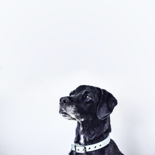 Waar heeft mijn hond last van?